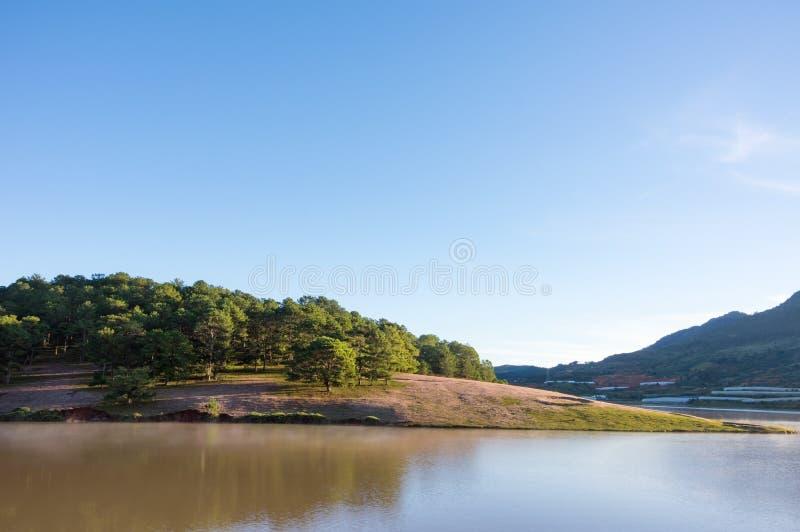 在桃红色草甸的美好的阳光有在草和新自然的露水的在日出第15部分 库存照片