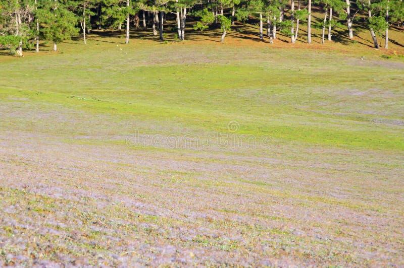 在桃红色草甸的美好的阳光有在草和新自然的露水的在日出第13部分 库存照片