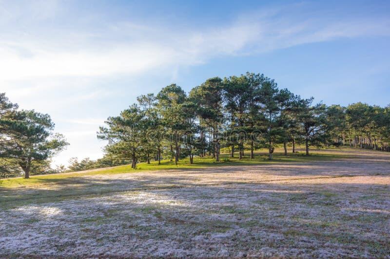 在桃红色草甸的美好的阳光有在草和新自然的露水的在日出第9部分 库存照片