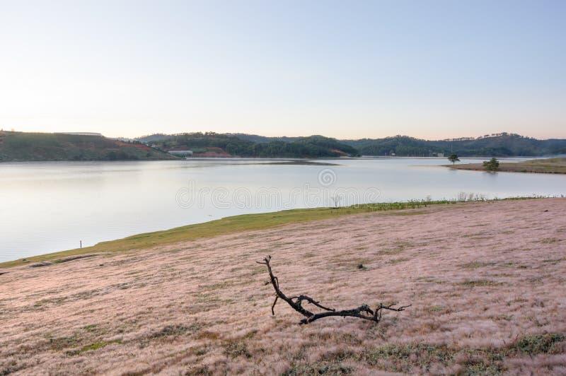 在桃红色草甸的美好的阳光有在草和新自然的露水的在日出第5部分 库存图片