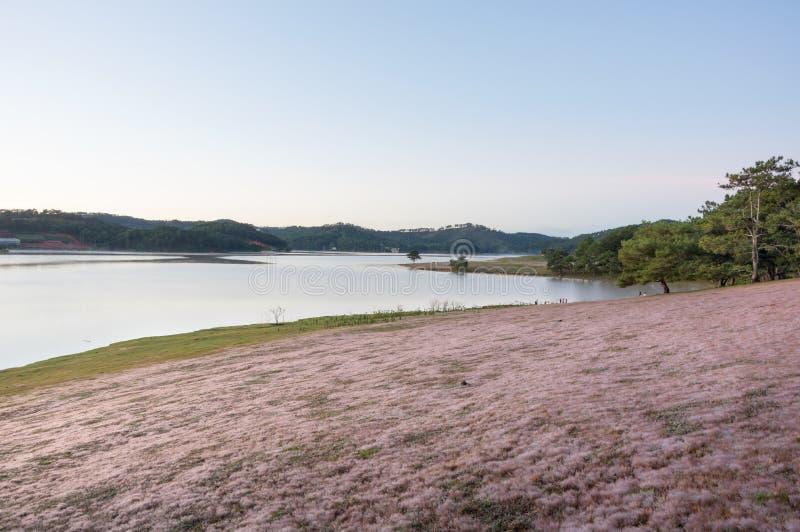 在桃红色草甸的美好的阳光有在草和新自然的露水的在日出第4部分 库存照片