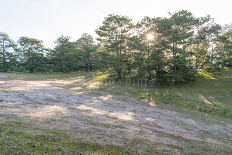 在桃红色草甸的美好的阳光有在草和新自然的露水的在日出第3部分 库存图片