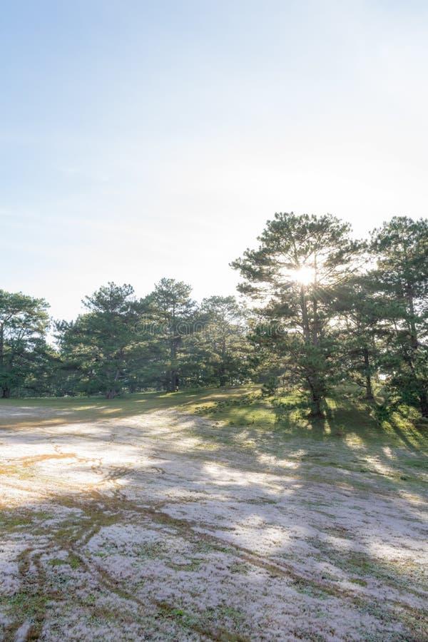 在桃红色草甸的美好的阳光有在草和新自然的露水的在日出第2部分 库存照片
