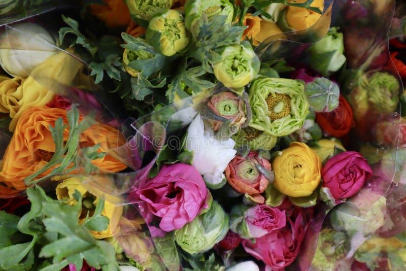 在桃红色,桔子和黄色的五颜六色的毛茛属花 库存照片