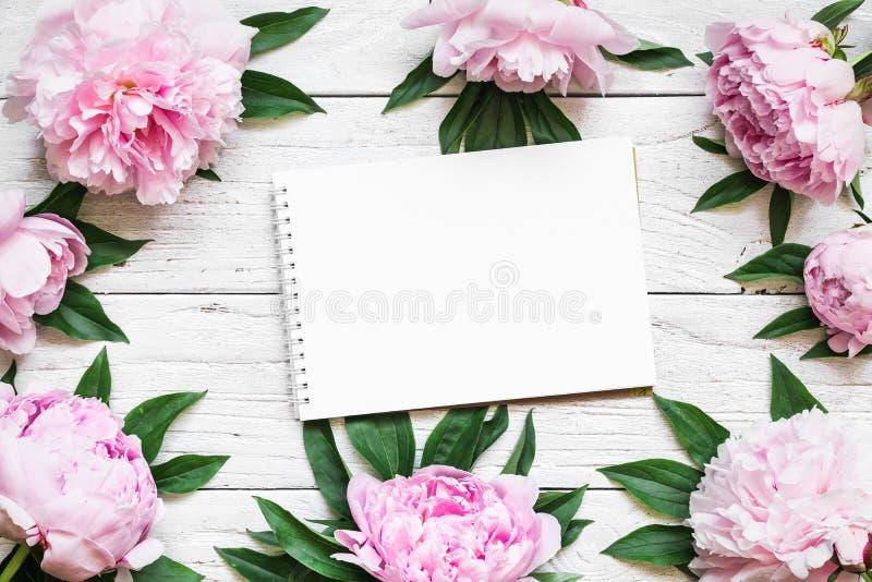 在框架的空白的贺卡由桃红色牡丹制成开花在与拷贝空间的白色木桌 背景构成旋花植物空白花的郁金香 图库摄影