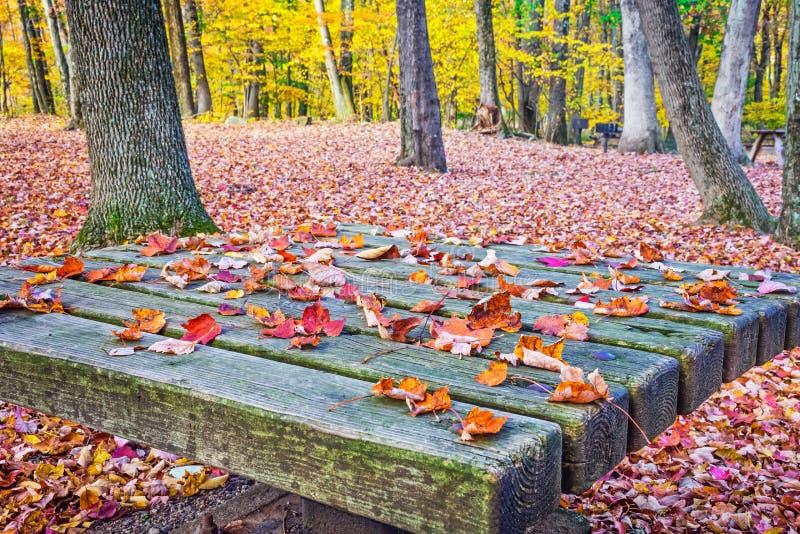 在桌上的下落的叶子 免版税库存图片