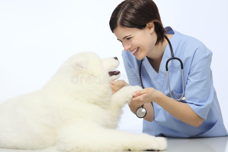 在桌上的微笑的兽医审查的狗爪子在狩医诊所 免版税库存图片