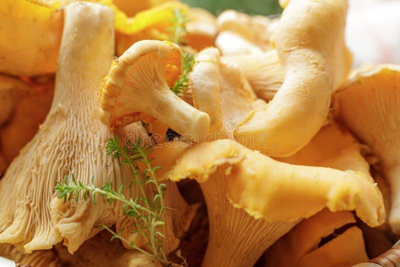 在桌上的新鲜的黄蘑菇蘑菇 蘑菇在清洗以后 图库摄影