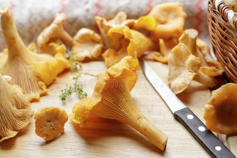 在桌上的新鲜的黄蘑菇蘑菇 蘑菇在清洗以后 库存照片