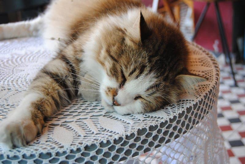 在桌上的猫在咖啡馆 免版税库存照片