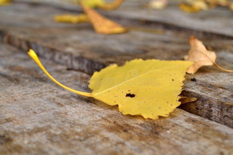 在桌上的秋叶 免版税库存照片