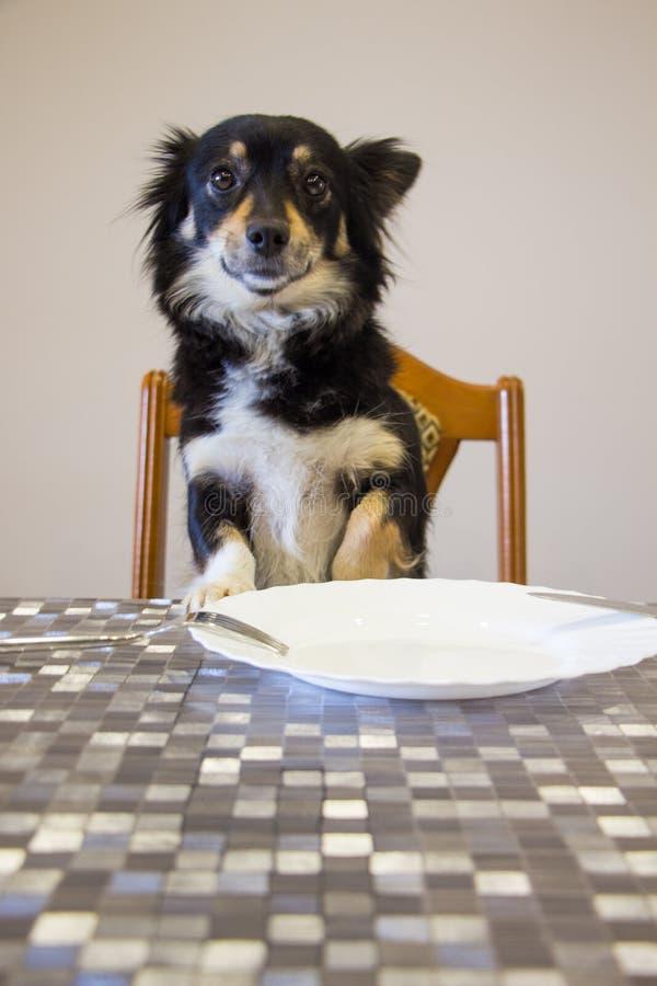 在桌上的逗人喜爱的小的小狗 免版税库存照片