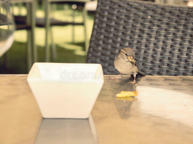 在桌上的饥饿的麻雀吃遗骸的 库存图片