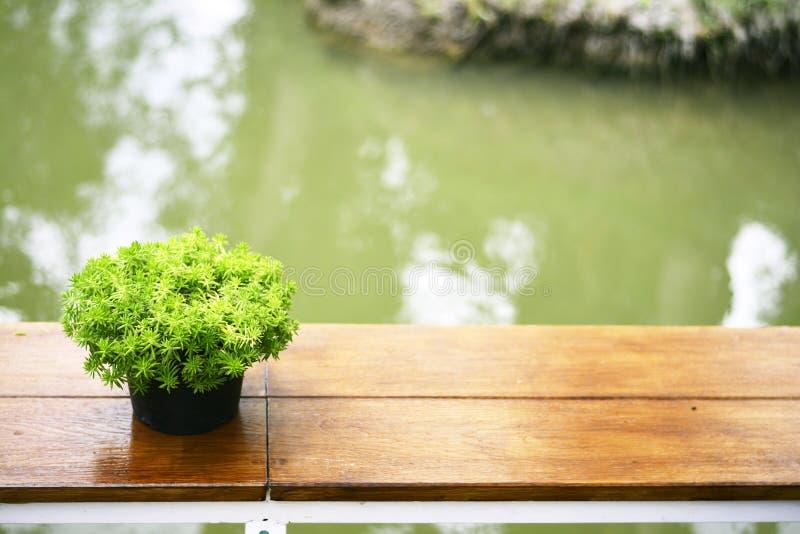 在桌上的绿色花盆在河附近 库存图片