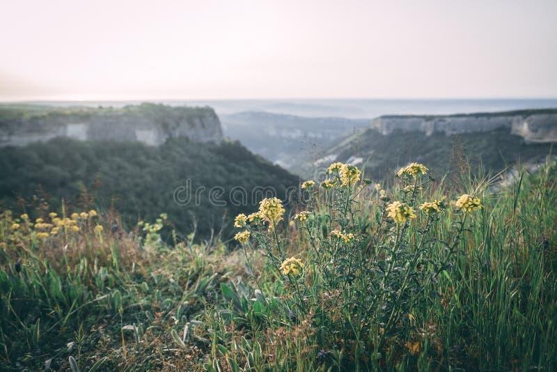 在桌山的日落在克里米亚在与花的多云天空下 库存照片