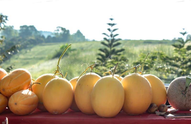 在桌,背景绿色树上的甜瓜黄色 库存照片