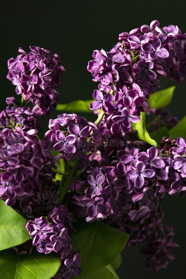 在桌,黑黑暗的背景上的淡紫色花 图库摄影
