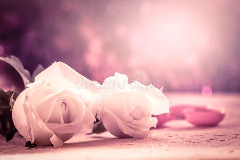 在桑树纸的白色玫瑰在桃红色软的颜色作用 免版税库存图片