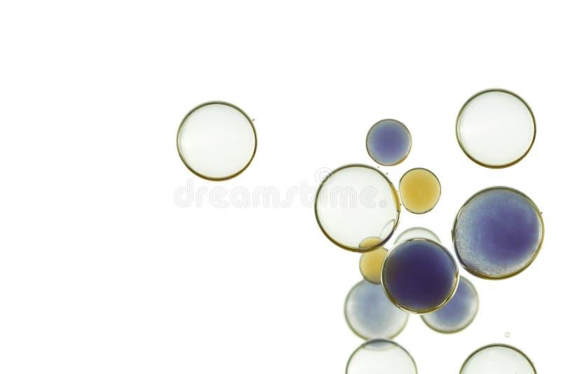在桔子的混合的泡影,淡紫色和白色 免版税库存照片
