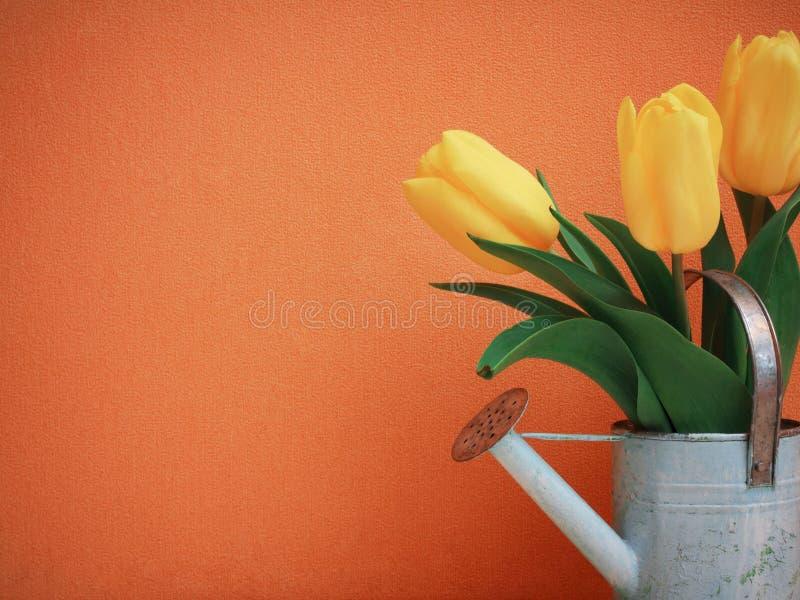 在桔子的郁金香花 免版税库存照片