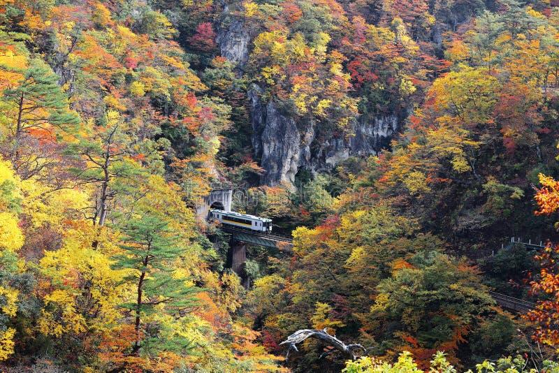 从在桥梁上的火车一个隧道出来在有五颜六色的秋天叶子的Naruko峡谷在垂直的岩石峭壁,在宫城 免版税库存照片