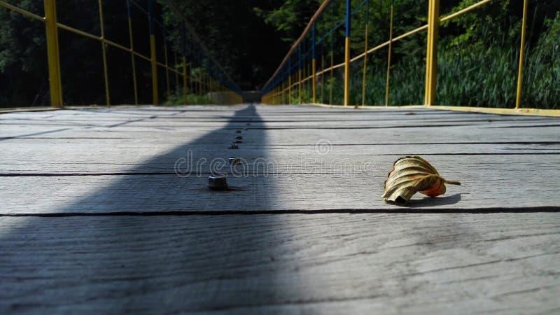 在桥梁的叶子 库存照片