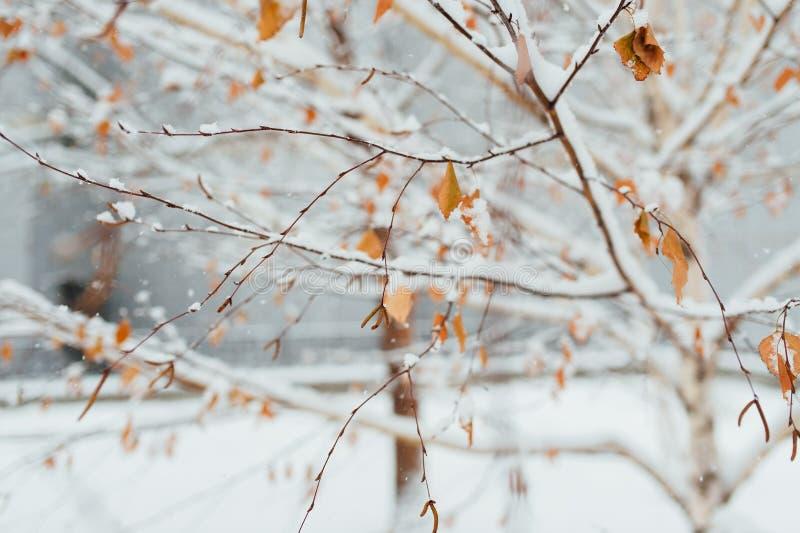 在桦树叶子的树冰在11月早晨 免版税库存照片