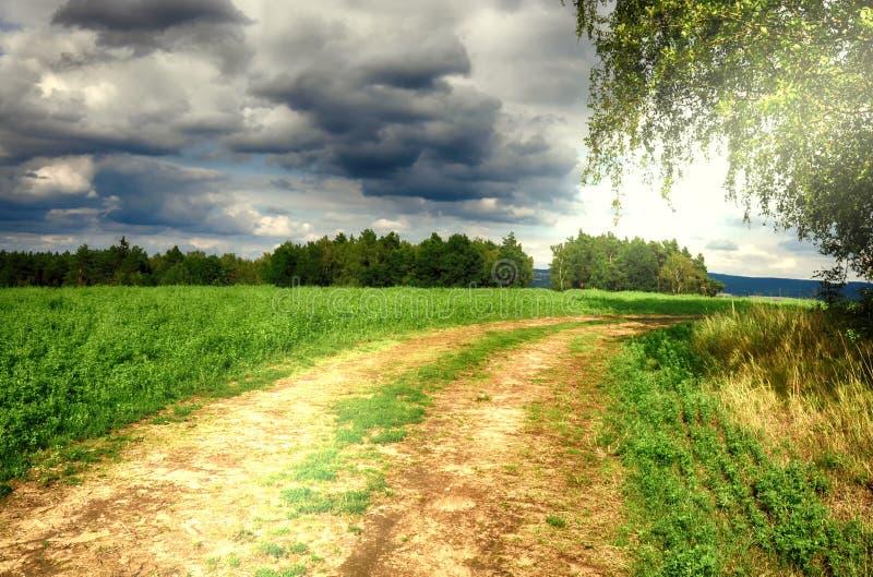在桦树和农业之间的地面路调遣 夏天农村自然 乡下风景,阳光,多云天空 免版税库存图片