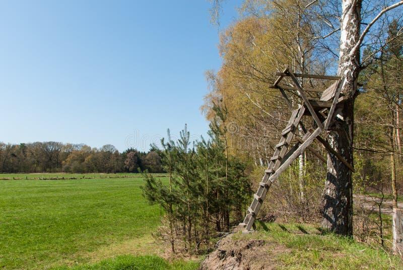 在桦树的梯子立场 免版税图库摄影