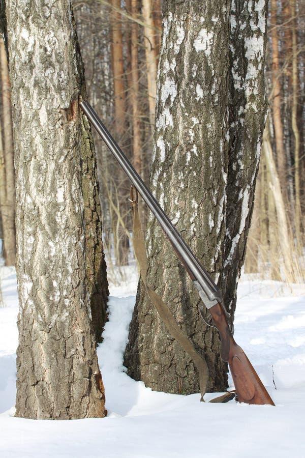在桦树附近的老猎枪在冬天森林里 库存照片