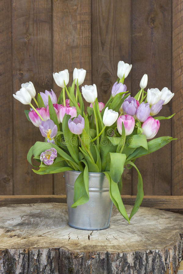 Download 在桶的五颜六色的郁金香 库存图片. 图片 包括有 生气勃勃, 本质, 背包, 五颜六色, 编排者, 开花 - 72359471