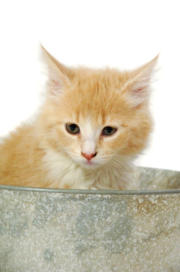 在桶的小猫 免版税库存照片