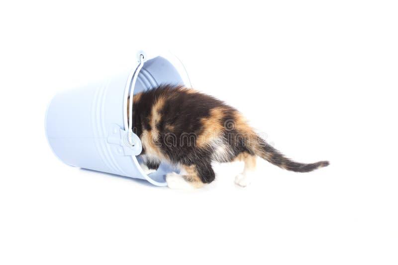 在桶的小猫 库存图片