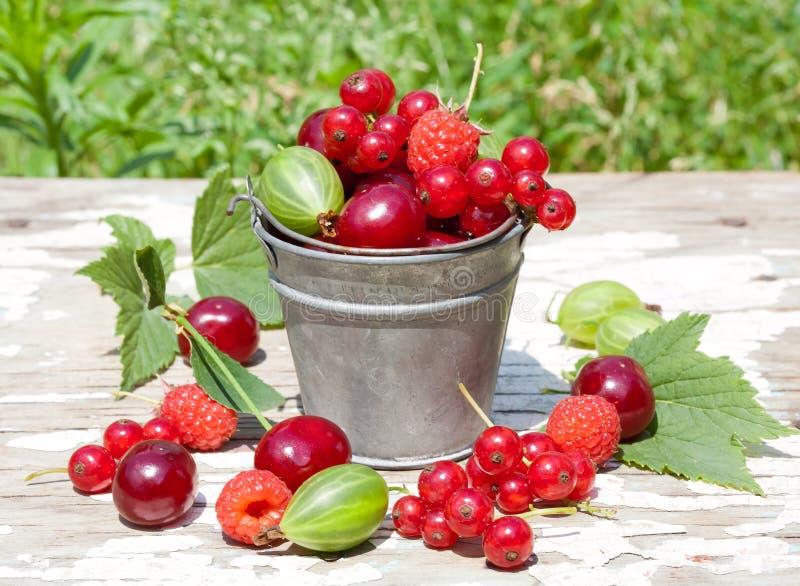 在桶的被分类的莓果 免版税库存照片