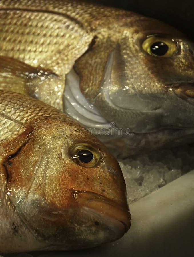 在梅卡度de Atarazanas的鲜鱼 免版税库存图片