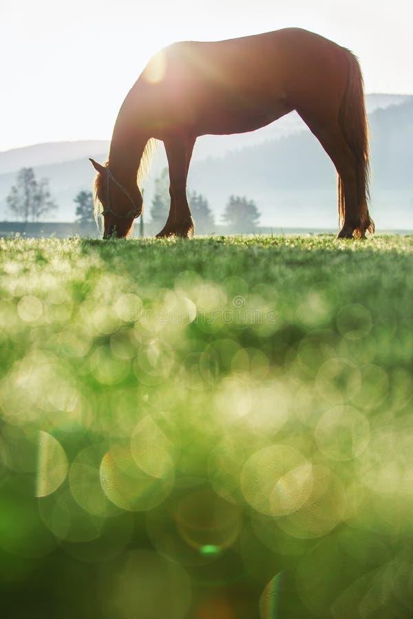 在梦想的山的神秘的日出 吃草在t的野马 免版税库存图片