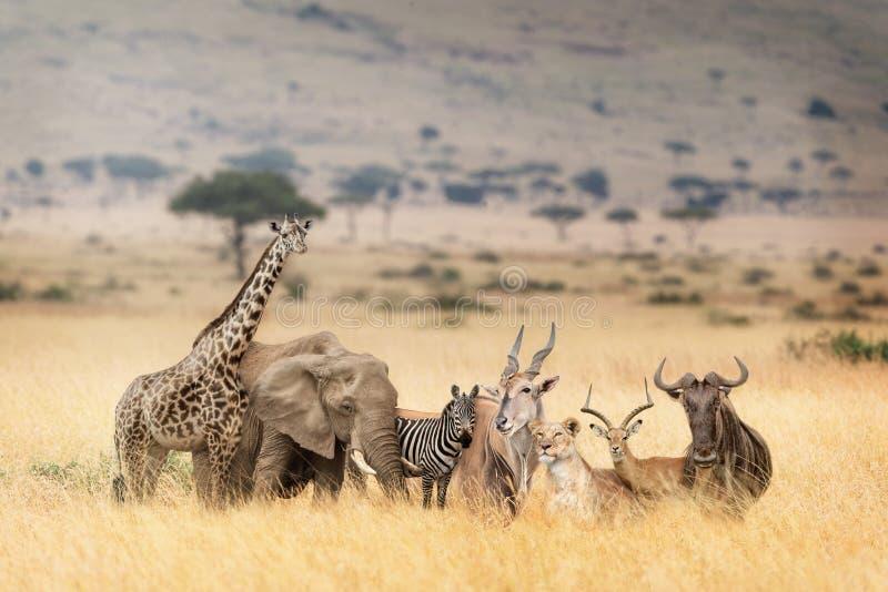 在梦想的肯尼亚场面的非洲徒步旅行队动物 免版税库存照片