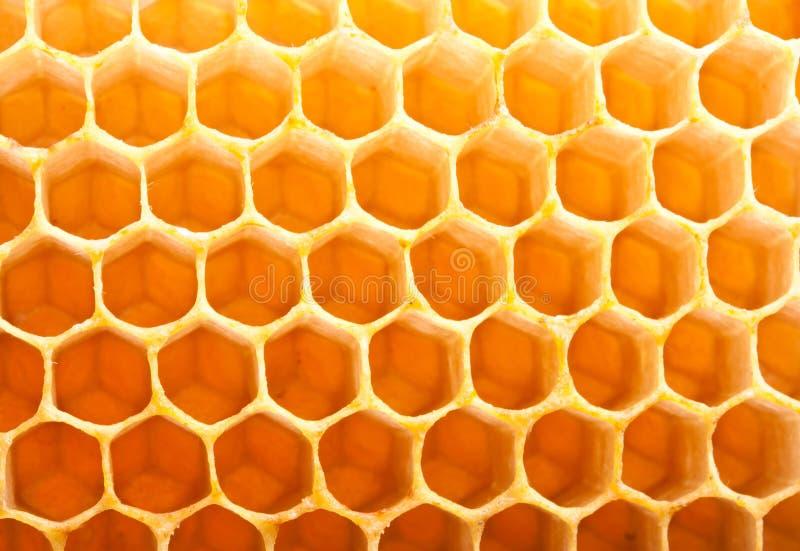 在梳子的蜂蜜 库存照片