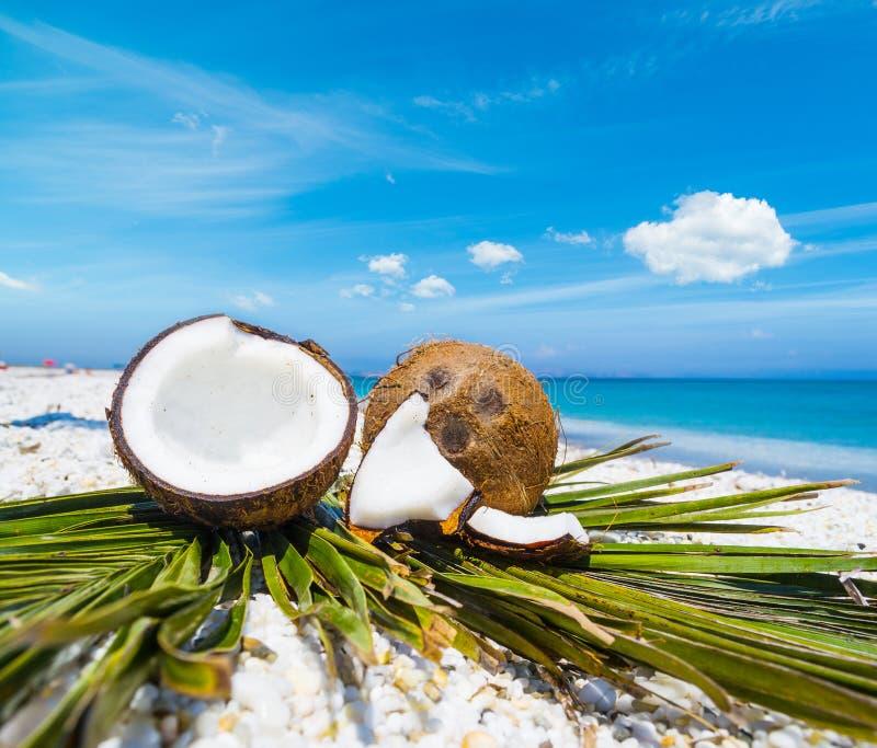 在棕榈叶的椰子一半 免版税库存照片