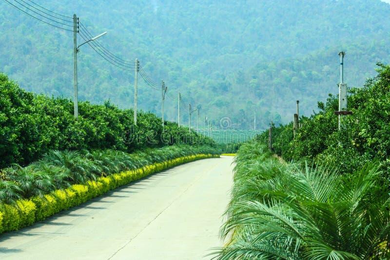 在棕榈和橙色领域的美丽的路 免版税图库摄影