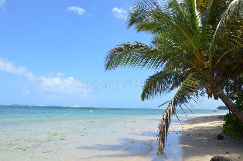 在棕榈树下在印度洋 免版税库存照片