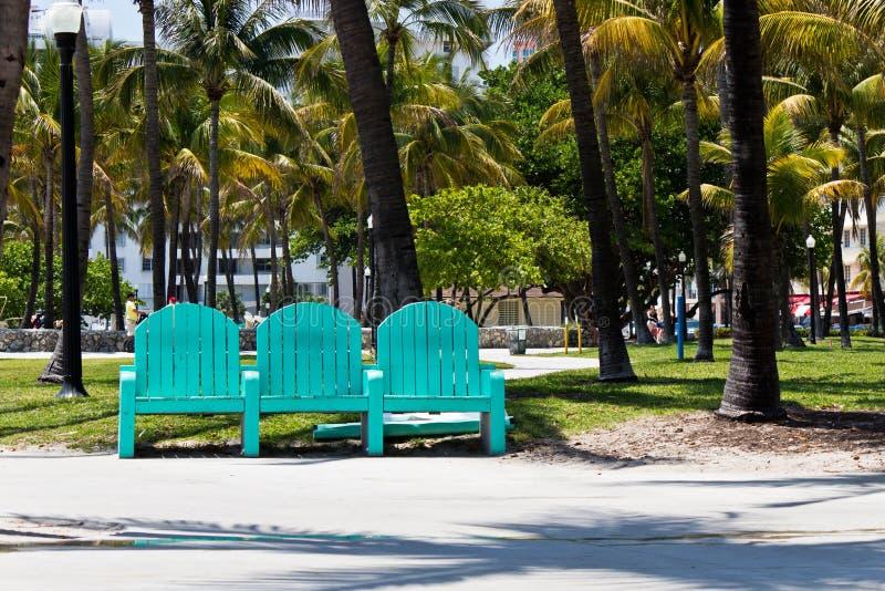 在棕榈树中的公园长椅在迈阿密,佛罗里达 库存图片