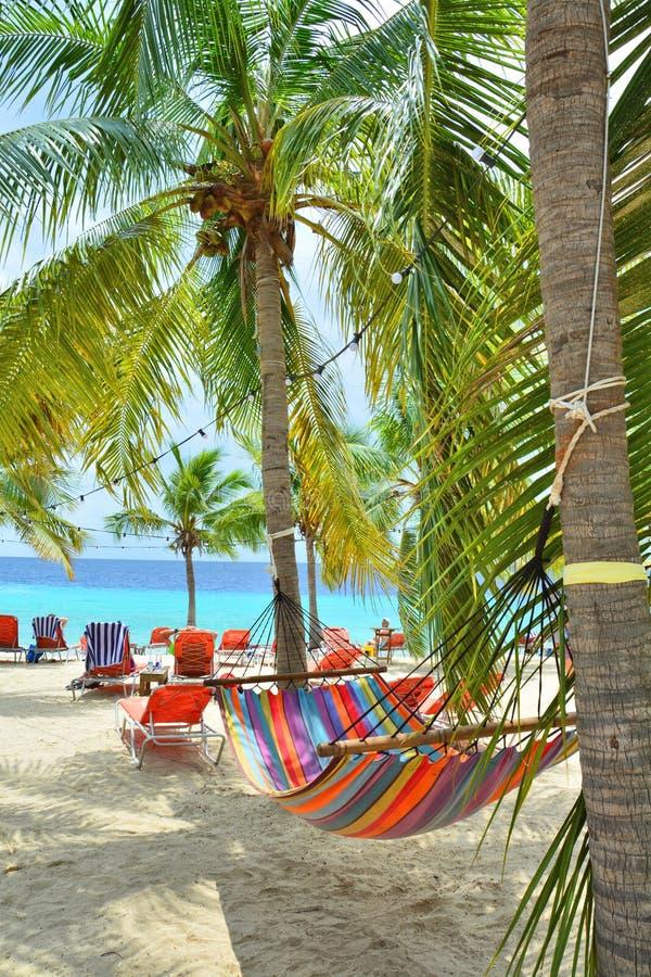 在棕榈树之间的吊床在库拉索岛海滩 免版税库存图片
