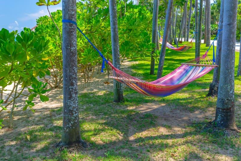 在棕榈树之间的吊床在热带海滩 假日和放松的天堂海岛 免版税库存图片