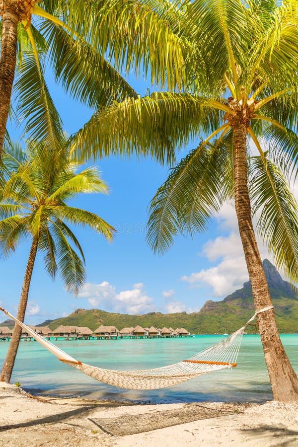 在棕榈树之间的空的吊床在热带海滩博拉博拉岛 免版税库存图片