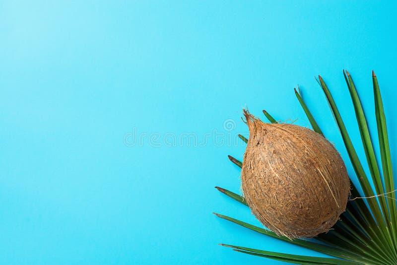 在棕榈树叶子的整个成熟椰子在绿松石浅兰的背景 壁角位置 海报飞行物的模板 热带 库存图片