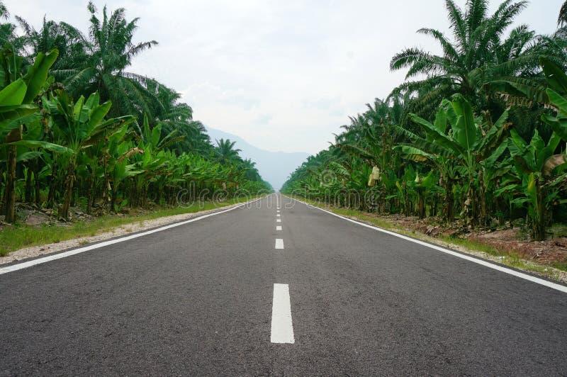 在棕榈树排行的路 免版税库存图片