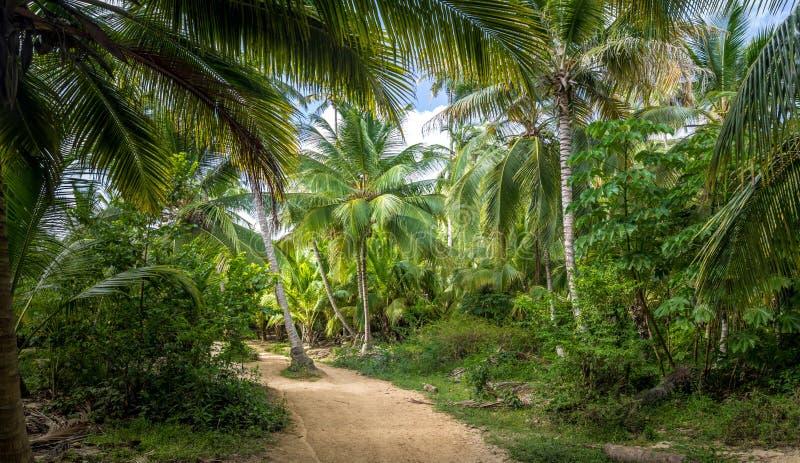 在棕榈树森林的道路- Tayrona自然国家公园,哥伦比亚 免版税库存图片