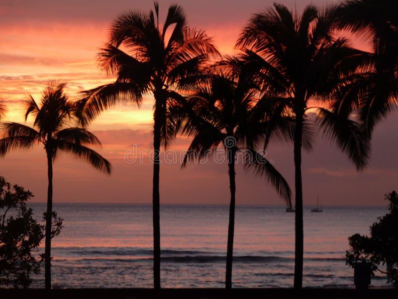 在棕榈树的完美 免版税库存照片