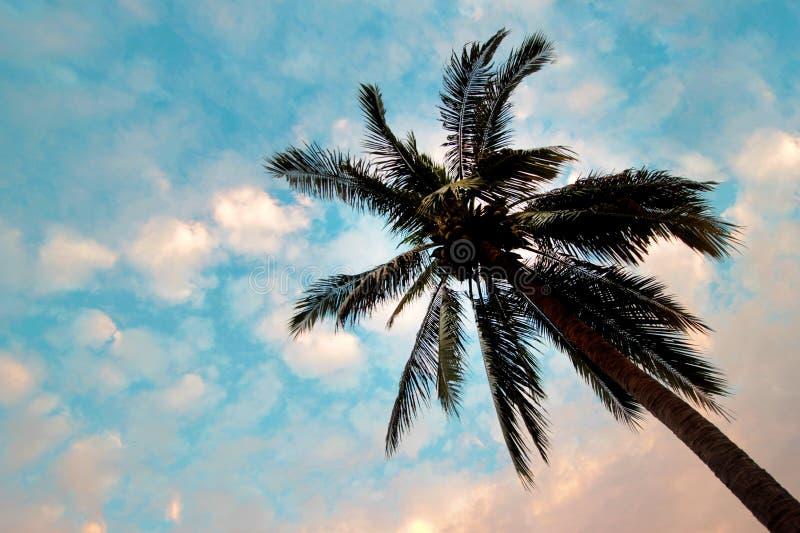 在棕榈树的底视图与蓝天 库存照片